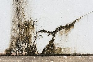 mold and mildew buildup in the cracks of a basement that will require the help of a professional fill dirt contractor to fill in and stop the leak of water that is causing it