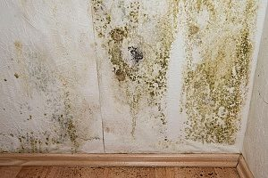 mold and mildew in the basement due to poor drainage during site grading