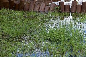 Can Fill Dirt Prevent Backyard Flooding?