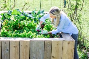 Happy woman checking on her plants in a raised garden bed