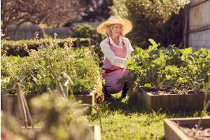 Senior woman tending her plants that are in a raised garden bed