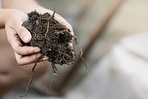 organic matter found in Virginia fill dirt