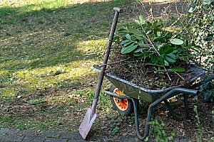 wheelbarrow of dirt and plants for greenhouse
