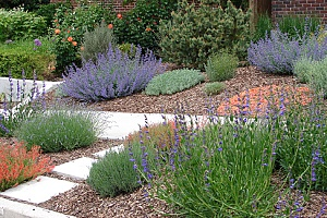 a beautiful xeriscape garden surrounded by mulch
