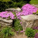 a rock garden constructed after a Virginia fill dirt delivery