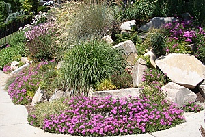 a xeriscape garden created by a homeowner