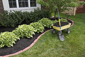 topsoil placed around plants for a rock garden project