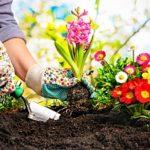 Rain Garden- Maintaining Plants