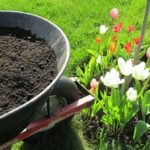 flowers blooming from screened topsoil