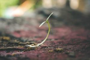Bioretention Soil