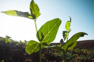 Soil- Bioretention