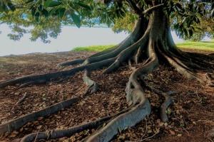Soil Bioretention