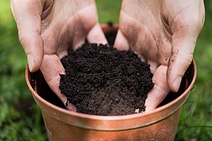 Potting soil and what it looks like.