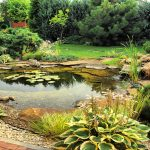water garden in backyard