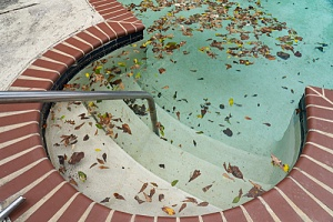 Leaves left in a pool