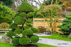 Oriental trees in backyard