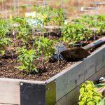 Gardening in a planter box