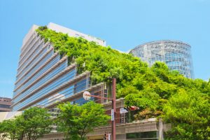 green roofs reduce stormwater runoff