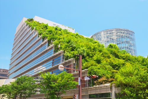 growing vines and architecture