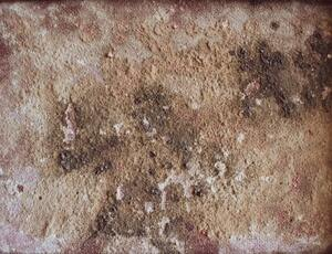 development of mold and mildew is one of the more common causes for expensive home repairs
