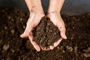Hand holding soil peat moss.Peat Moss can be an effective way to lower your soil acidity