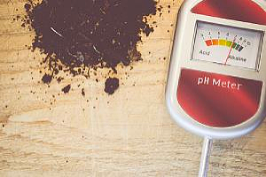 dirt and a ph meter on the ground which is used to determine the ph of acidic soil