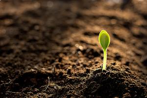 Closeup of a seedling. The ideal soil pH for most soil is between 6 and 7.5
