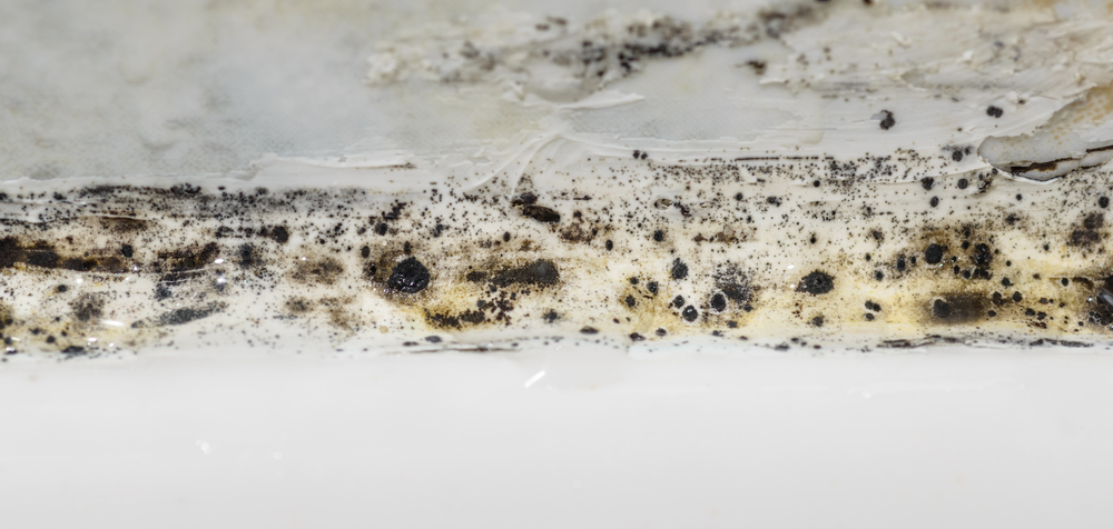 Bathroom mold, not good
