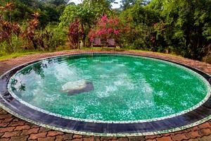 Small Green Swimming Pool In A Yard
