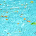 Fall leaves in inground pool