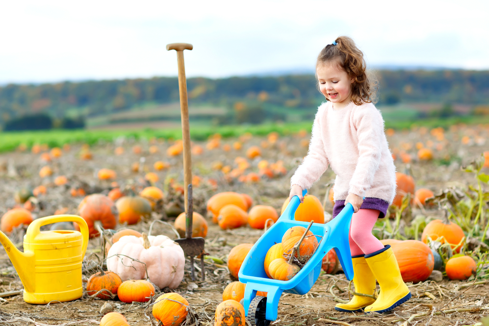 fall gardening with the little ones