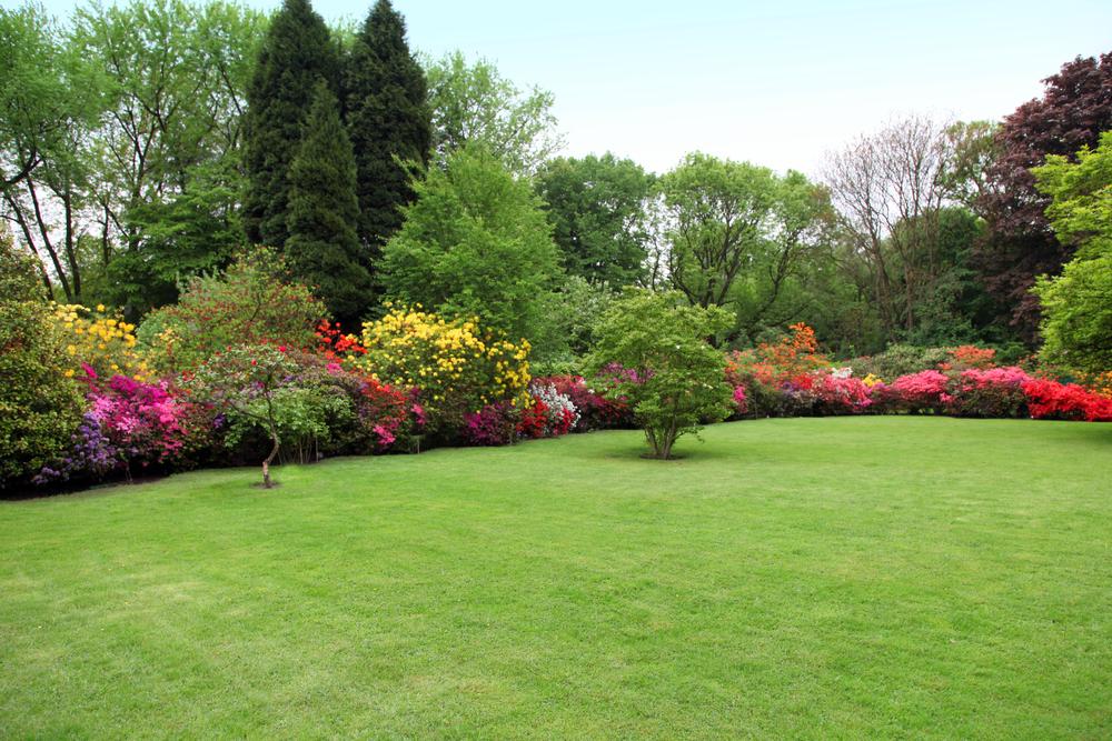 fall gardening plants