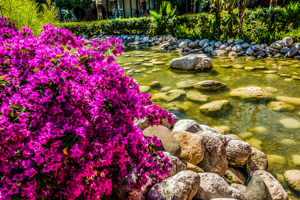 waterfalls with beautiful colored flowers and shrubs